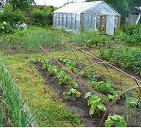 Как правильно подбирать предшественников:огород на даче