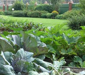 Как вырастить хороший урожай на маленьком участке земли?