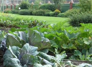 Оптимальное чередование овощных культур