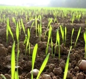 Роль органического землеробства в экологии