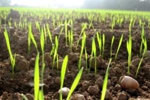 Роль органического землеробства