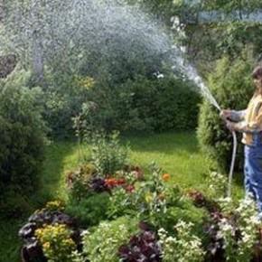 Какие растения очень требовательны к высокой влажности почвы?