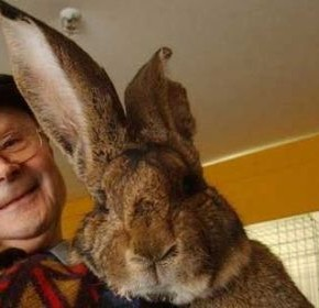 Как правильно выращивать кроликов?