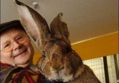 Сколько лет можно держать кроликов на развод