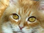 Можно ли кормить кота сухим кормом?