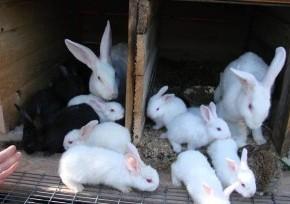 Что делать,чтобы кролики не болели?