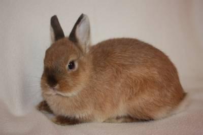 Что делать,чтобы кролики не болели