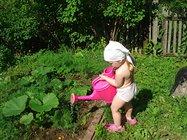 овощным растениям