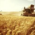 Хлеба будет больше, чем в прошлом году
