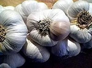 Почему чеснок болеет фузариозом?