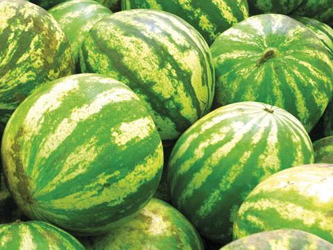 В Ингушетии установят заслон арбузам с нитратами