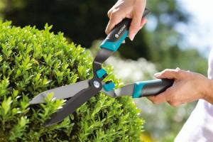 Как обрезать живые изгороди