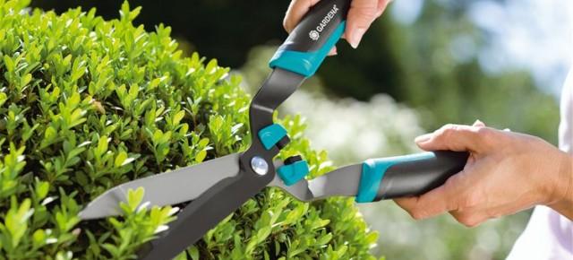 Как обрезать живые изгороди в саду