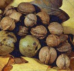 Сбор, сушка и хранение орехов