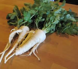 Почтенный овощ - пастернак