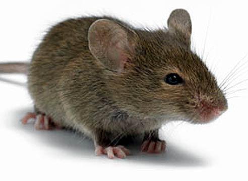 Мышка бежала, хвостиком махнула...