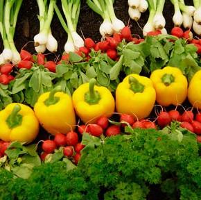 Как вырастить экологически чистые овощи