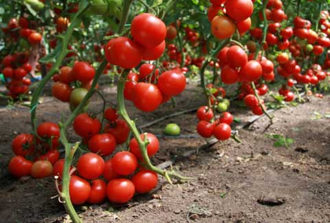 Без «мелочей» нет урожая