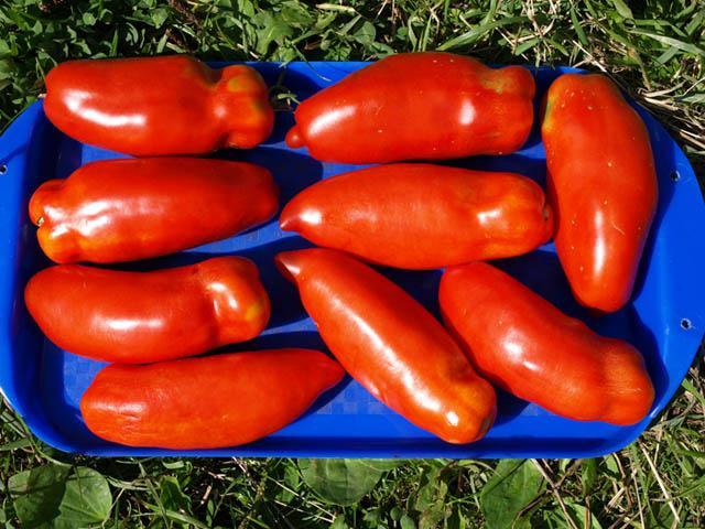 Консервные помидорчики - как избежать ошибок