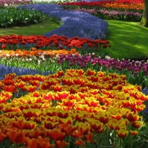 Цветы отблагодарят нежным цветением
