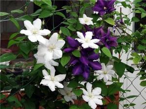 Еще больше прекрасных цветов