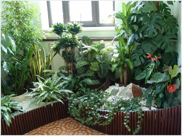 Весна - время пересадки комнатных растений