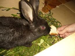 Кормление кроликов: рацион на день