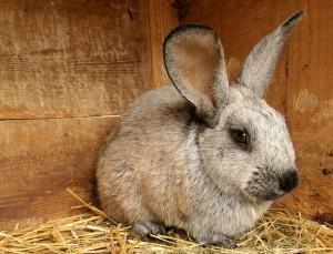 Метод Михайлова для круглогодичного содержание кроликов