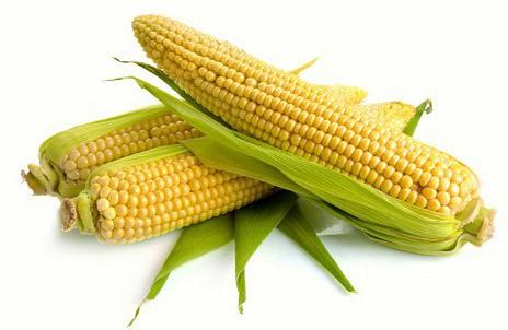 Кукурузная дюймовочка - карликовая кукуруза
