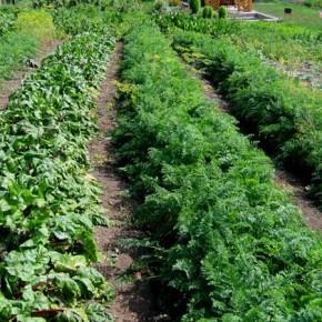 Грядоутворювач - агрегат для овощеводства