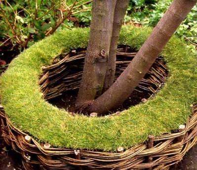 Как выращивать саженцы на моховом субстрате