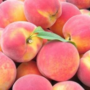 Как вырастить персики на севере Украины