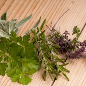 Пряно-ароматические травы: красивое содружество