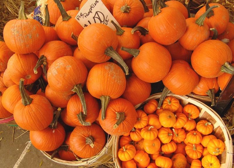 Миниатюрные тыквы - маленькое оранжевое чудо