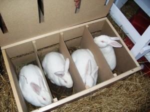 Требования к разведению и содержанию кроликов.