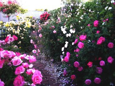 Консервирование — как искусство: розы