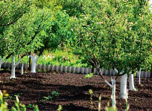 Плодовый сад: испытание холодом, испытание жарой