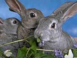 Качество мини-ферм для кролиководства