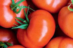 Летне-осеннее предложение томатов для теплиц от «Сингента»