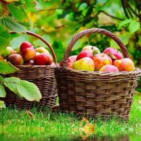 Благоприятные дни для посева в августе 2014 по лунному календарю