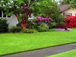 Уход за газонами: полив , кошения , подкормки , мульчирование , аэрация