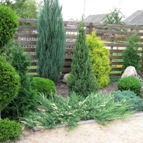 Излюбленные приемы озеленителей с использованием хвойных