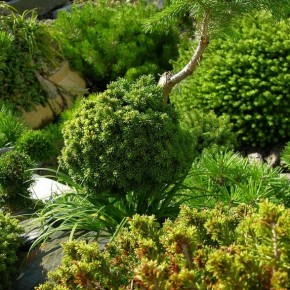 """""""Есть растения, зеленые всегда..."""""""