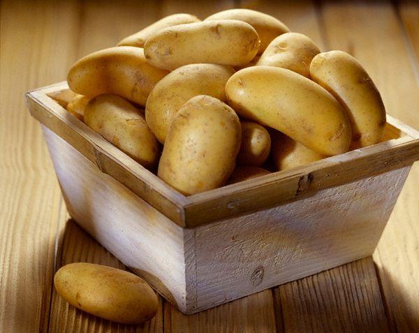 Как выбрать высококачественный семенной картофель