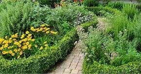 Пряные травы - ароматная украшение дачного участка