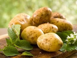 Сажать картофель лучше в апреле