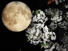 Какие растения сажать, когда луна растет