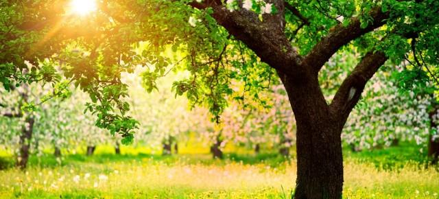 Как распознать дерево по листьям