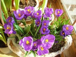 Какие комнатные цветы хорошо иметь дома