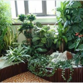 Рекомендации по озеленению и уходу для офисов